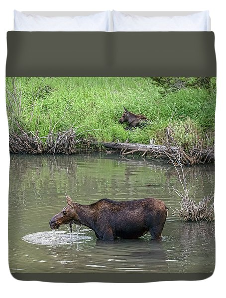 Duvet Cover featuring the photograph Cow Moose And Calf by James BO Insogna