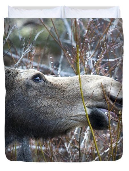 Cow Moose Dining On Willow Duvet Cover