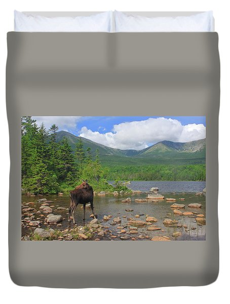 Cow Moose Looking Back At Sandy Stream Pond Duvet Cover by John Burk