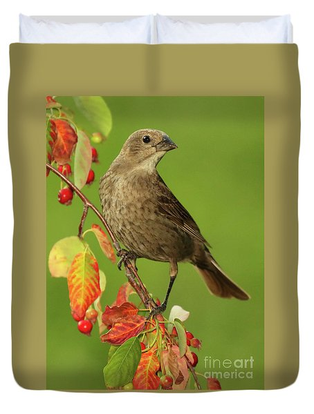 Cowbird Among Berries Duvet Cover