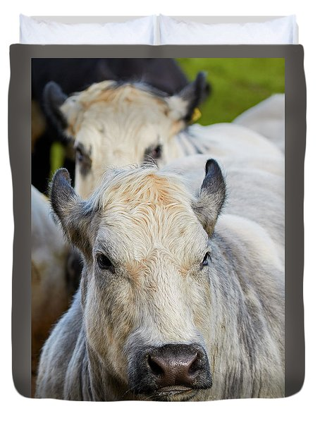 Duvet Cover featuring the photograph Cows In A Row by Nick Biemans
