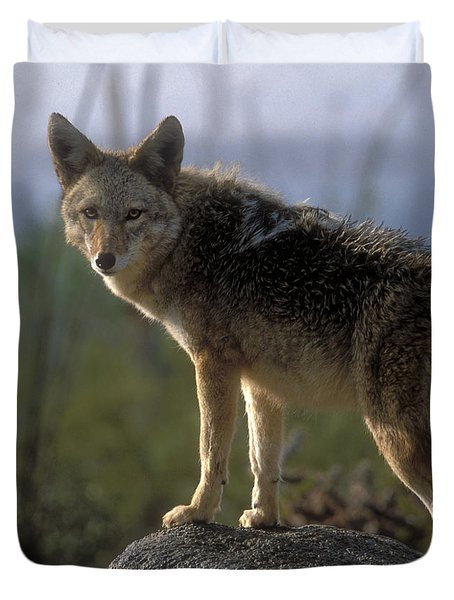 Coyote In Ocotillo Trees Duvet Cover by Sandra Bronstein