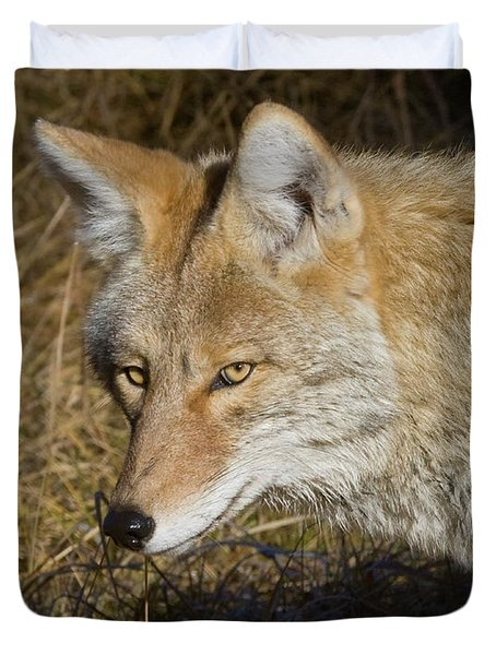 Coyote In The Wild Duvet Cover