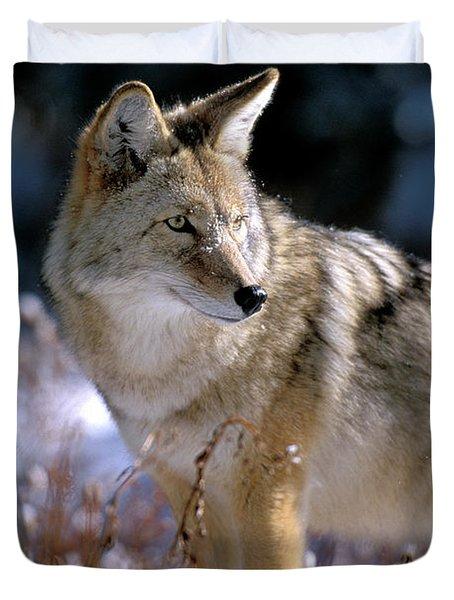 Coyote In Winter Light Duvet Cover