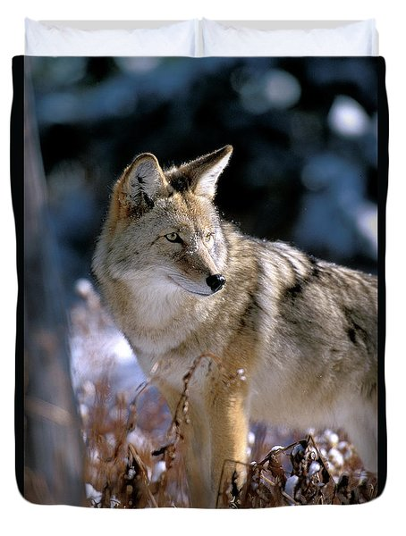 Coyote In Winter Light Duvet Cover