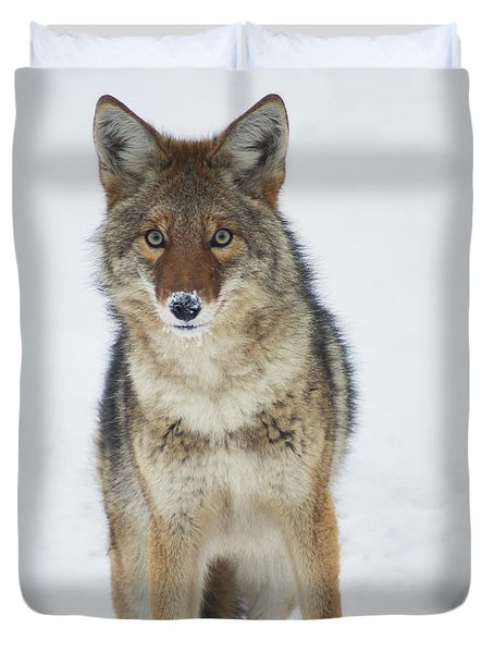 Coyote Looking At Me Duvet Cover by Stanza Widen