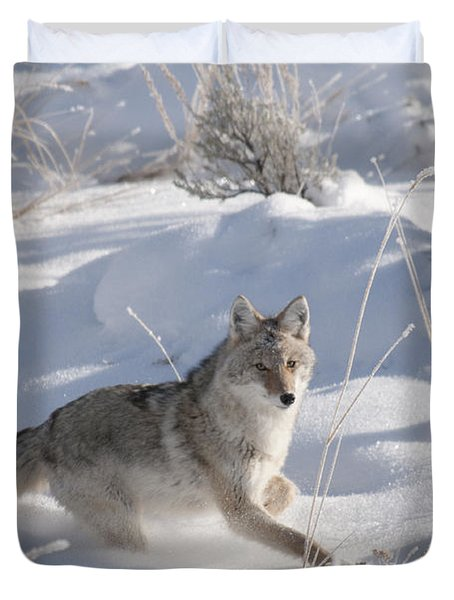 Coyote On The Move Duvet Cover