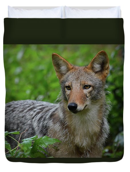 Coyote On The Prowl  Duvet Cover