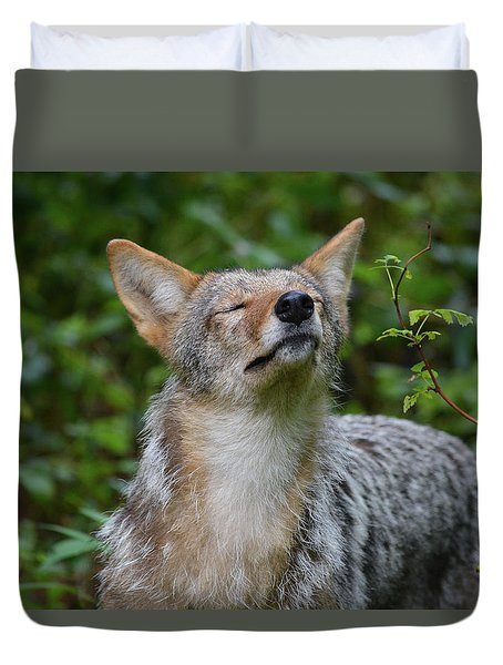 Coyote Soaking Up The Morning Sun Duvet Cover