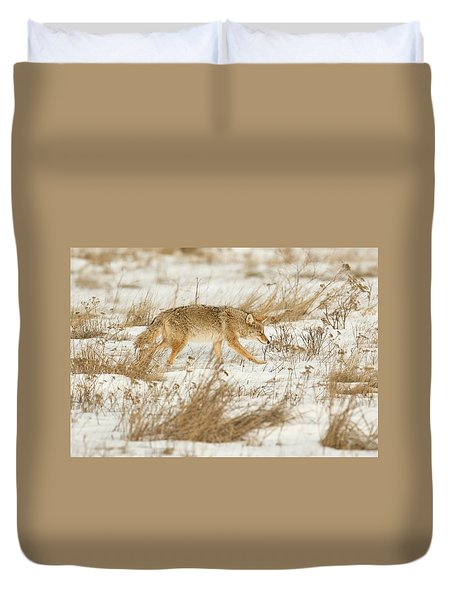 Coyote Stalk Duvet Cover