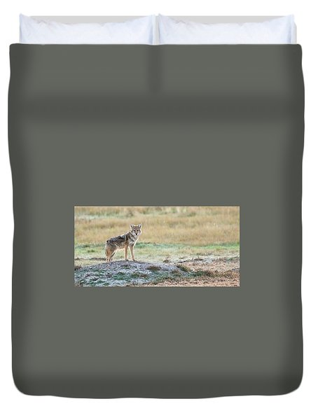 Duvet Cover featuring the photograph Coyotee by Kelly Marquardt