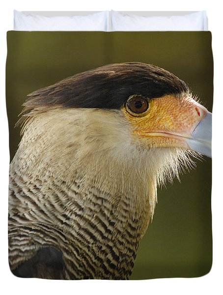 Crested Caracara Polyborus Plancus Duvet Cover by Pete Oxford