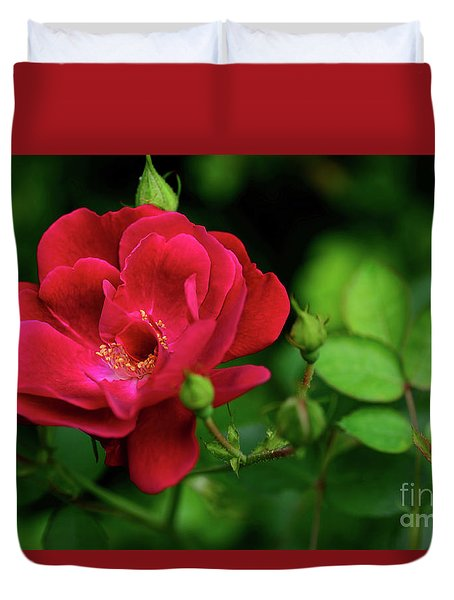 Duvet Cover featuring the photograph Crimson Red Rose By Kaye Menner by Kaye Menner