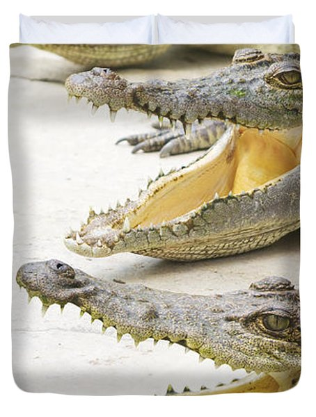 Crocodile Choir Duvet Cover by Jorgo Photography - Wall Art Gallery