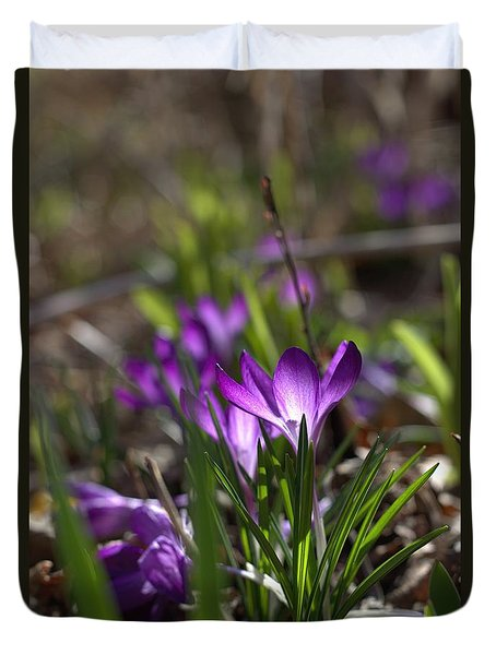 Duvet Cover featuring the photograph Crocus Day by Kathy Bassett