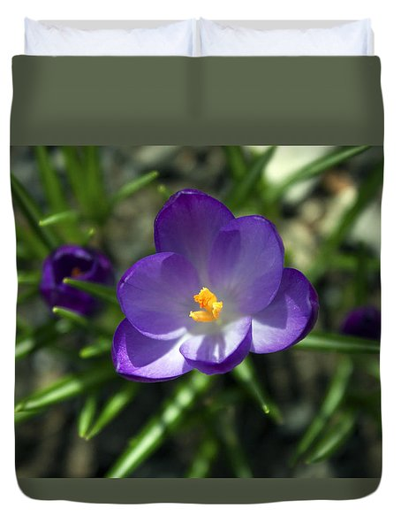 Crocus In Bloom #1 Duvet Cover by Jeff Severson