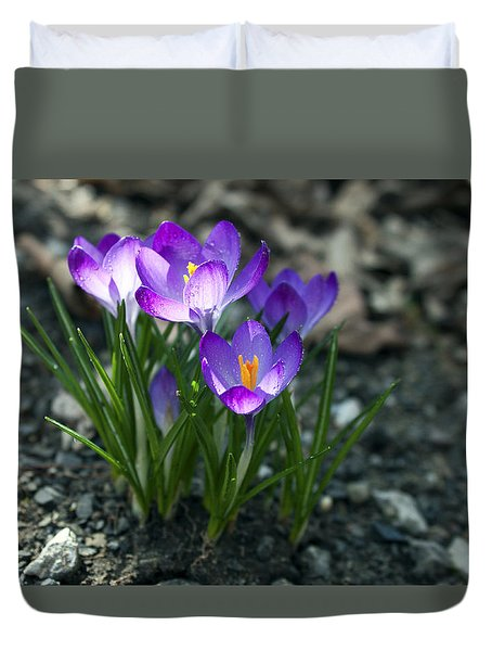 Crocus In Bloom #2 Duvet Cover