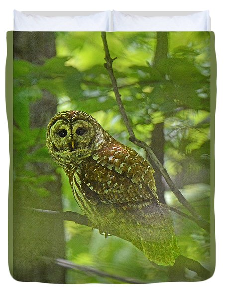 Curious Barred Owl Duvet Cover