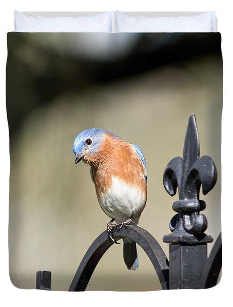 Duvet Cover featuring the photograph Curious Bluebird by John Black