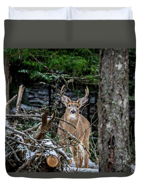 Curious Buck Duvet Cover