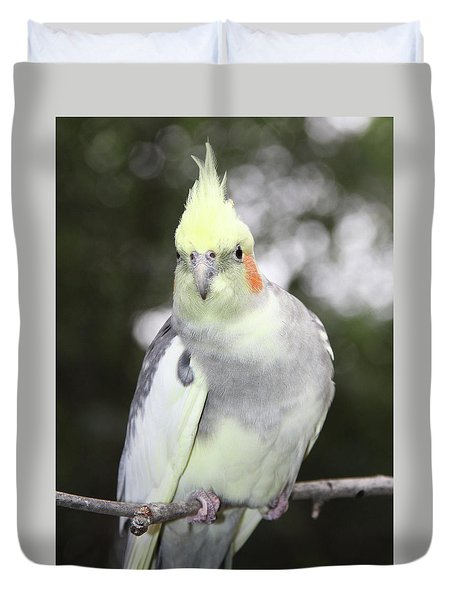 Curious Cockatiel Duvet Cover