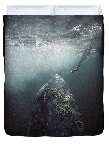 Duvet Cover featuring the photograph Curious Gray Whale And Tourist by Tui De Roy