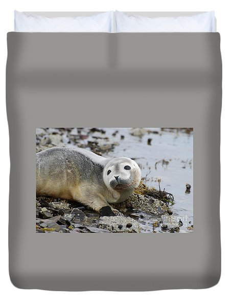 Curious Harbor Seal Pup Duvet Cover