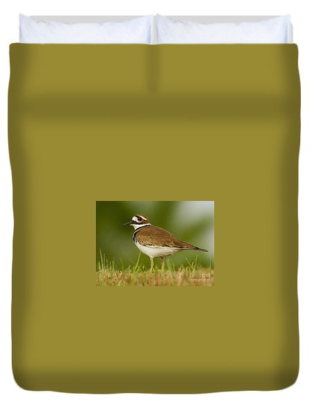 Curious Killdeer Duvet Cover by Myrna Bradshaw
