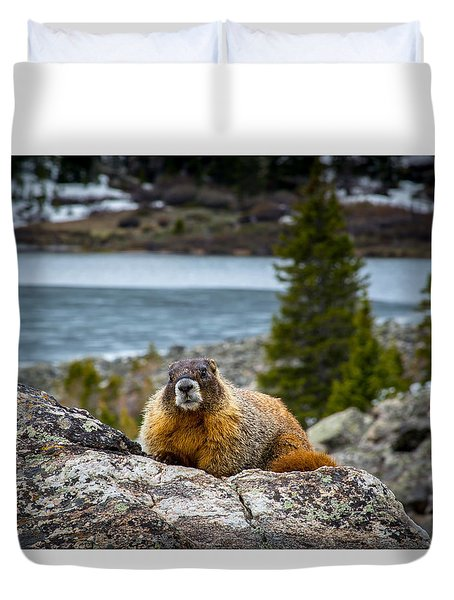 Curious Marmot Duvet Cover by Michael J Bauer