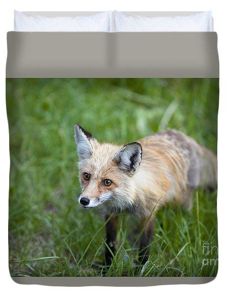 Curious Red Fox Duvet Cover