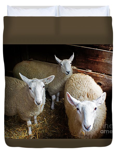 Curious Sheep Duvet Cover by Kevin Fortier