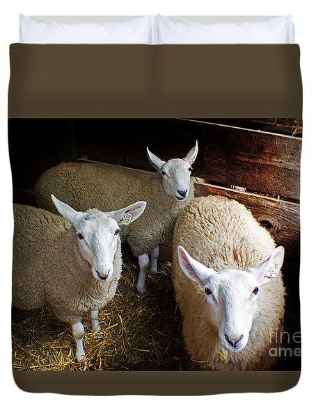 Curious Sheep Duvet Cover