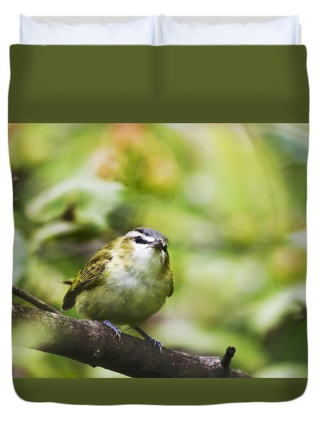 Curious Vireo Duvet Cover by Christina Rollo