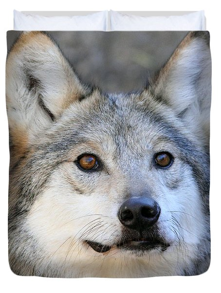 Curious Wolf Duvet Cover