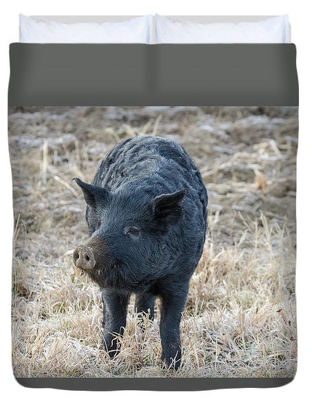 Duvet Cover featuring the photograph Cute Black Pig by James BO Insogna