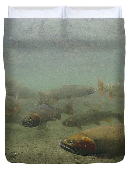 Cutthroat Trout Swim Duvet Cover by Michael S. Quinton