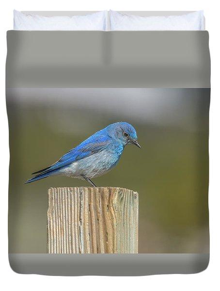 Daddy Bluebird Guarding Nest Duvet Cover