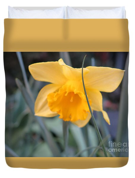 Daffodil Duvet Cover by Rod Ismay