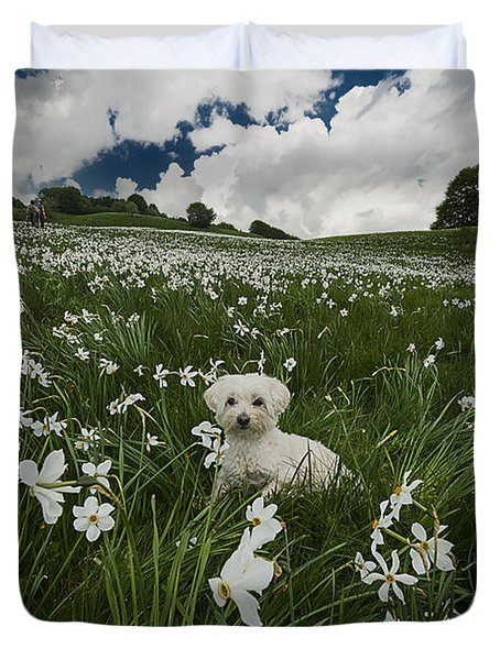 Daffodils White Blossoming With Little White Lilly 3 Duvet Cover