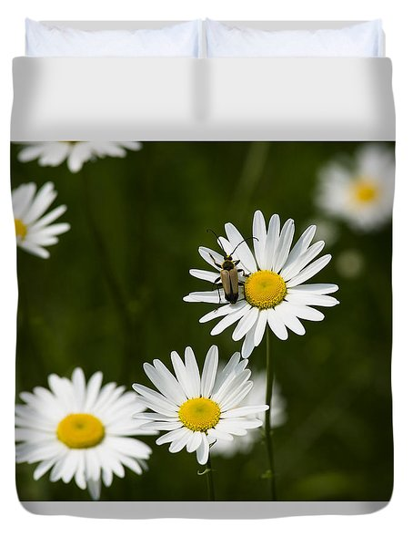 Daisy Visitor Duvet Cover by Dan Hefle