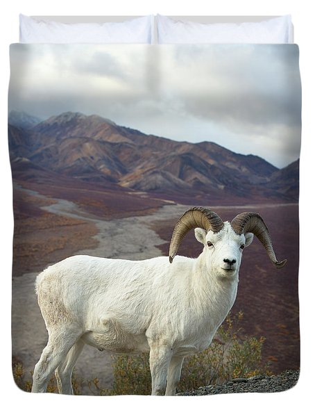 Dalls Sheep In Denali Duvet Cover