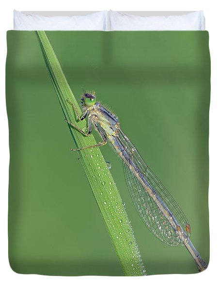 Damselfly Duvet Cover