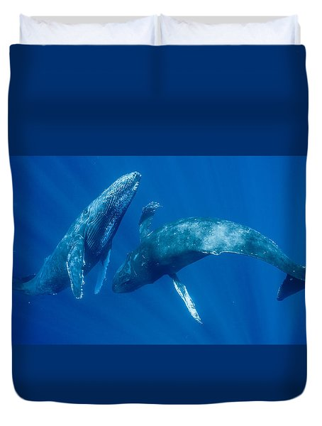 Dancing Humpback Whales Duvet Cover by Flip Nicklin
