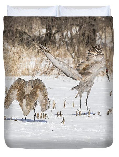 Dancing Sandhill Cranes 2016-1 Duvet Cover by Thomas Young