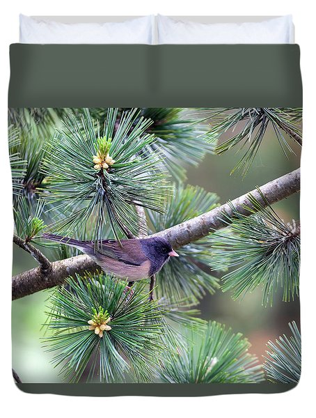 Dark-eyed Junco On A Pine Tree Duvet Cover by David Gn