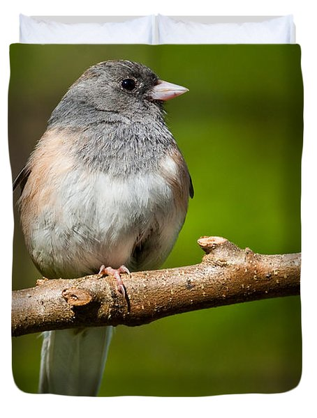 Dark Eyed Junco Perched On A Branch Duvet Cover