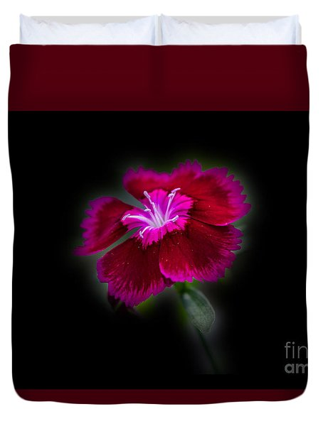 Dark Pink Dianthus Duvet Cover by Donna Brown
