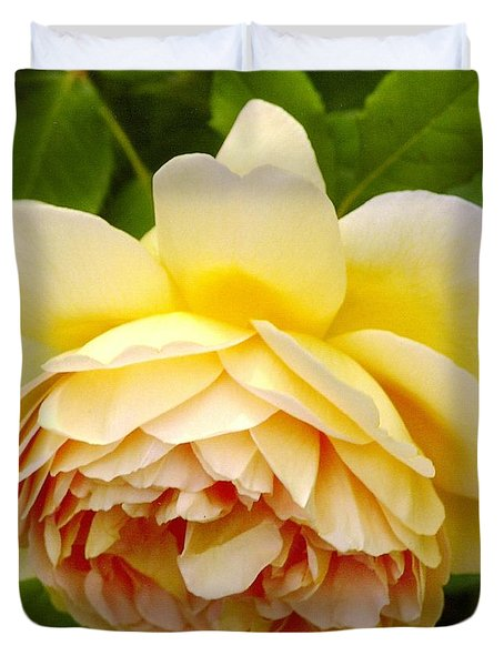 David Austin Rose Golden Celebration 2 Duvet Cover by Rod Ismay