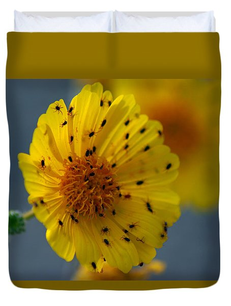 Death Valley Superbloom 102 Duvet Cover by Daniel Woodrum
