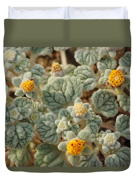 Death Valley Superbloom 302 Duvet Cover by Daniel Woodrum